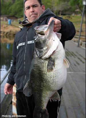 spawning female bass