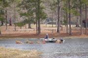 cabin rental bass lake