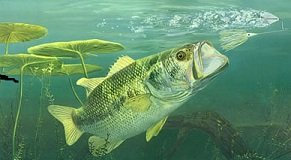 top water lures bass fishing techniques